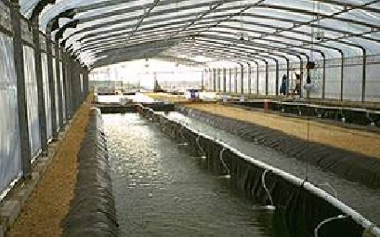 Technical liners for Aquaculture